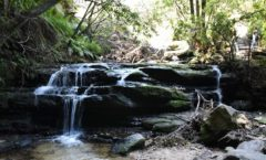 "Enjoy trekking in the Blue Mountains! Of the cliff to the ""Lula cascade"""